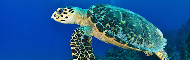 Shellebrate World Turtle Day!