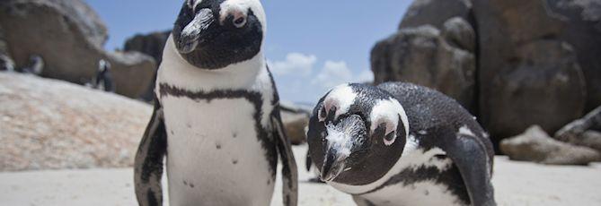 Penguin Awareness Day – 10 fun 'Penguish' Facts!