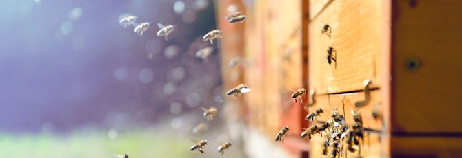 Beekeeping on Your Curriculum
