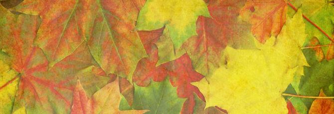 3 Creative Autumn Classroom Activities